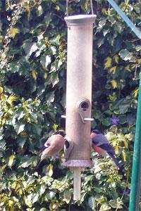 theBigBuzz Ornithological Highlight2006