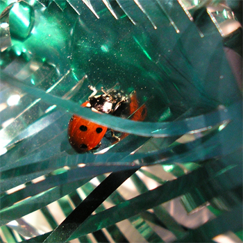 Festive Ladybird on our tinsel, January 2007