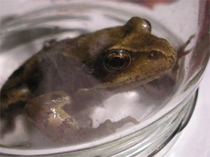 theBigBuzz Amphibian Highlight,2006