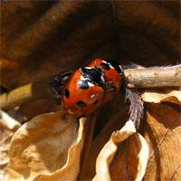 ladybirds26307-3b.jpg