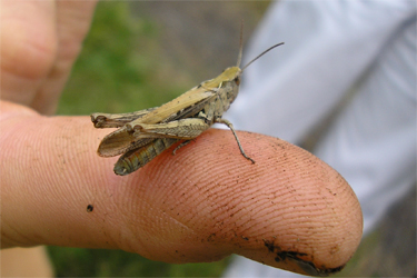 Grasshopper on John's finger, St Nick's, 11.8.07