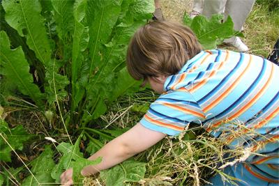 Beady-eyed bug hunter, St Nick's,11.8.07