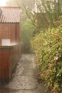 Monsoon June inHeslington