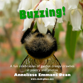 Anneliese's Buzzing! CD booklet cover