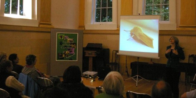 Performing my Buzzing! Moth Show, 24 June 09 (Photo: Paul Rhodes)