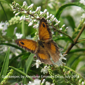 Gatekeeper in Heslington, photo by Anneliese Emmans Dean