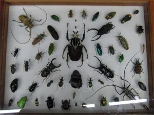 Beetles at the Natural History Museum