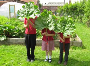 Fishergate pupils at their allotment with freshly picked rhubarb