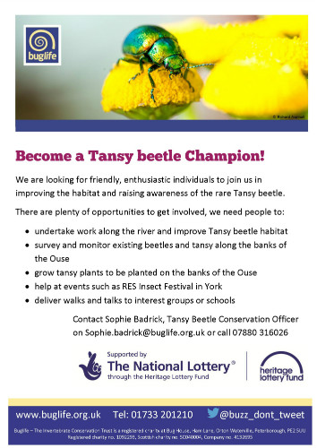 sm 150611 Tansy beetle Champions poster