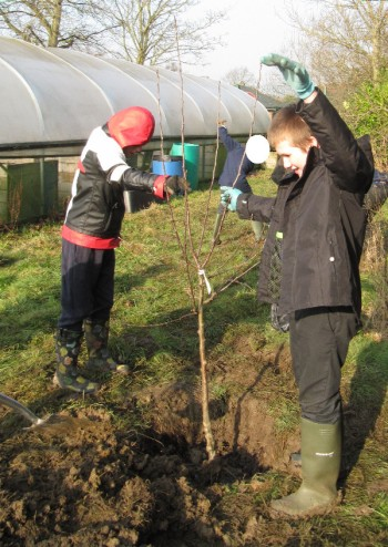 Apple tree planting at Applefields School